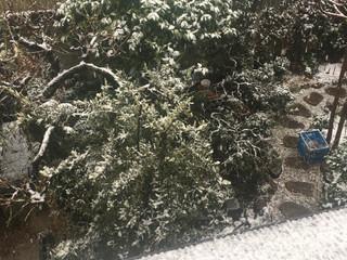 ちょっとだけ雪が降る