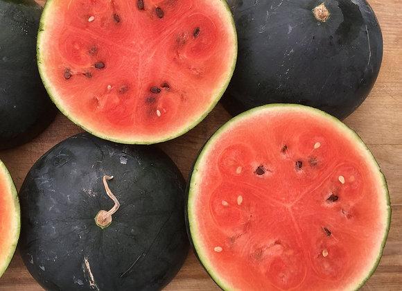 Melon d'eau Blacktail