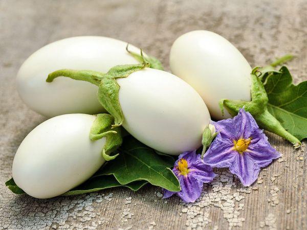 Aubergine Japanese white egg