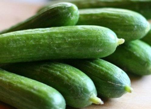 Concombre Libanais