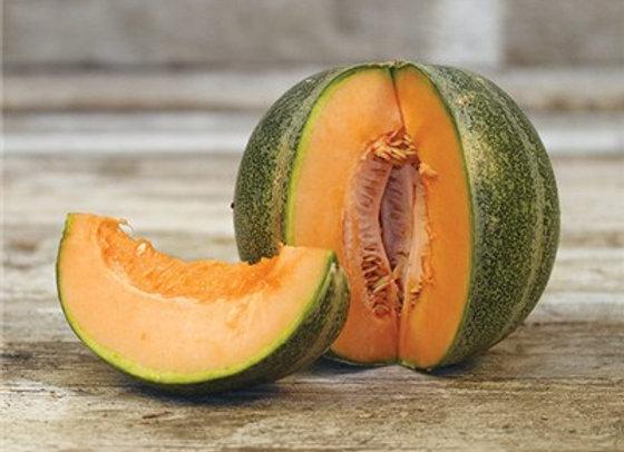 Melon Petit Gris (Cantaloup)
