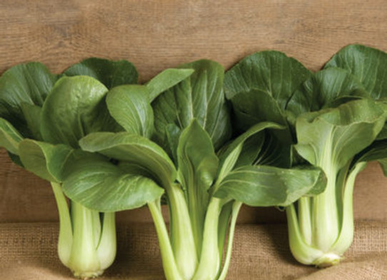 Bok Choy Black Summer