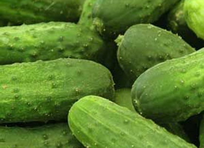 Concombre National Pickling