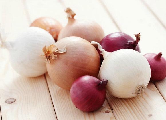 (SAC 3.5 lbs) Oignon blanc