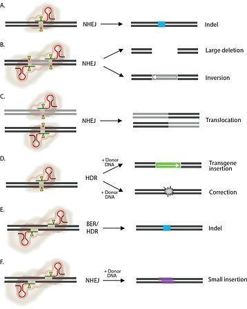 CRISPR application.jpg