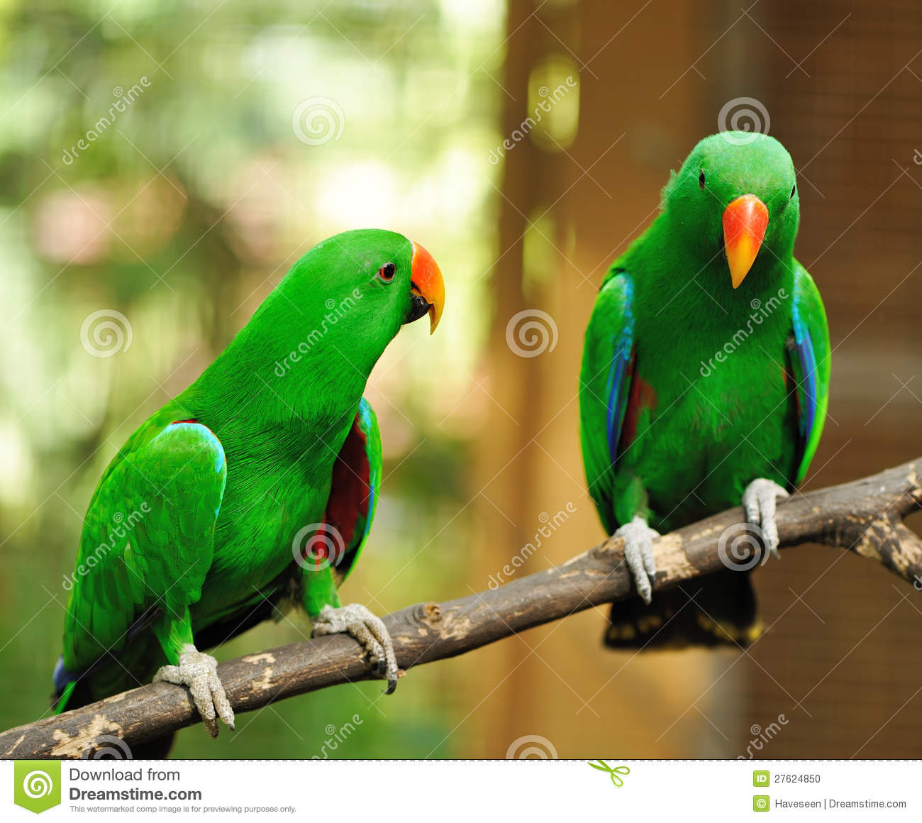 couple-green-eclectus-parrots-27624850