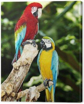 tableaux-sur-toile-deux-perroquet-vert-foret-tropicale