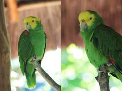 xaman-ha-aviary