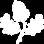 Trachtlerin_Logo_Eichblatt-weiss.png