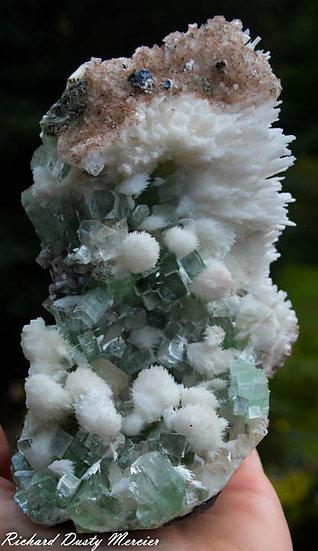 Apophyllite verte avec Mordenite