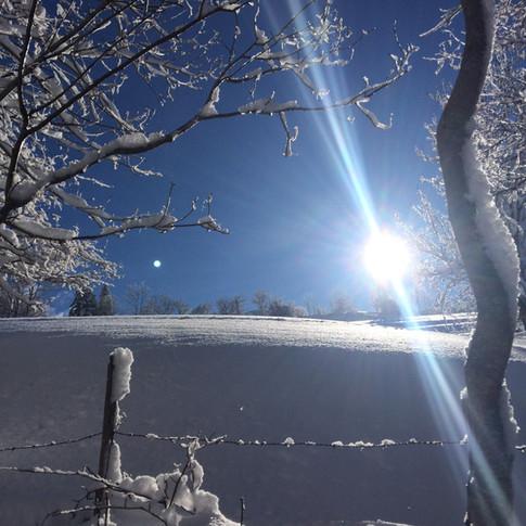 autour en hiver 20-21