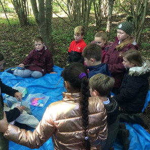 Year 5 Enjoy a 'Magical' Time at Summerhill