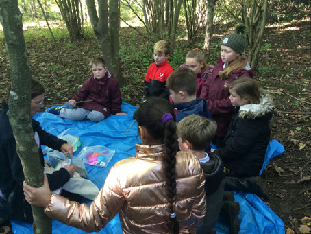 Year 5 Enjoy a 'Magical' Time at Summerhill