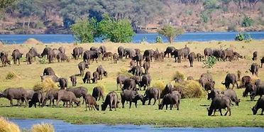 Zimbabwe Hunting Area Info