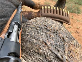 Zimbabwe Hunting Rates / Prices