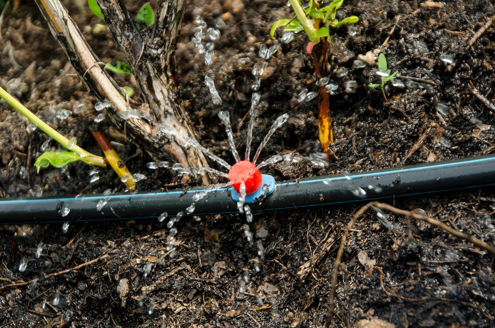 Drip irrigation. The photo shows the irr