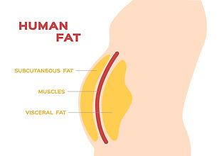 110606844-human-belly-and-abdomen-fat-la