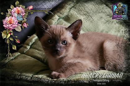kitten-2020-16.png