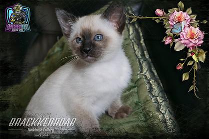 kitten-2020-18.png