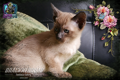 kitten-2020-17.png