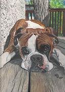 The Artwork of Holly Fox Ellis Pet Portraits