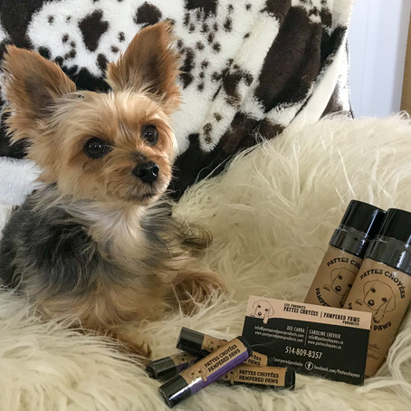 Product test: Pampered Paw Nose Balm