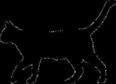J'habille ton chat Latté Saguenay