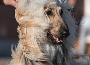 Dogs: Types of hair and brushes
