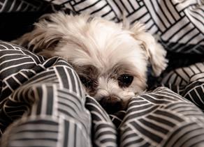 Gérer l'anxiété du chien avec la Naturopathie