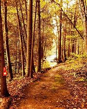 Parc Régional de la Rivière Gentilly
