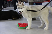 Can'idée - Éducation Canine