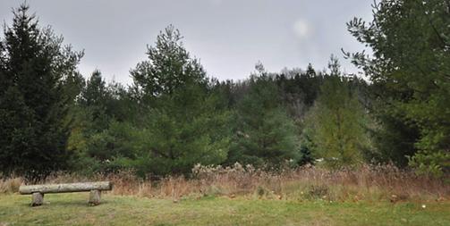 Celebration Forest Trail