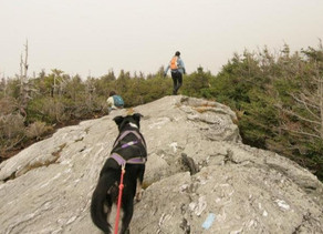 Hiking with your dog - discover