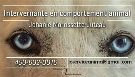Johanie Intervenante en comportement animal