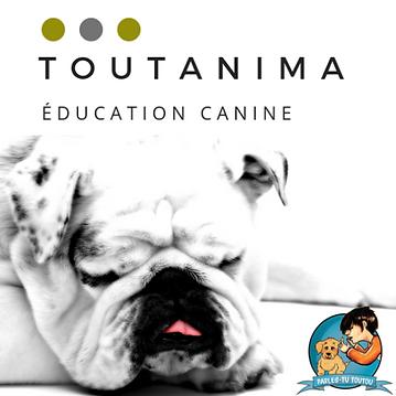 Toutanima éducation canine