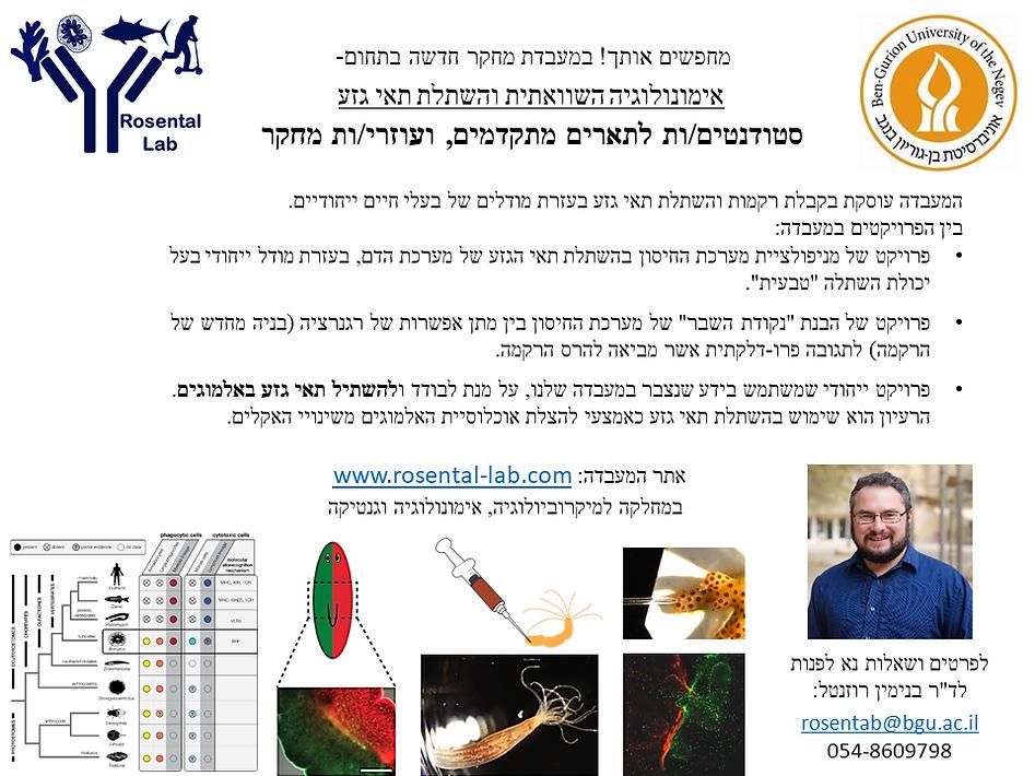 פרסומת מעבדה עברית.tif