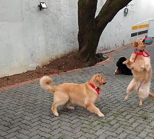 creche-para-cachorro.png