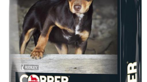 Cobber Puppy Dog