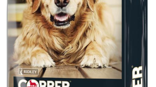 Cobber Lazy Dog