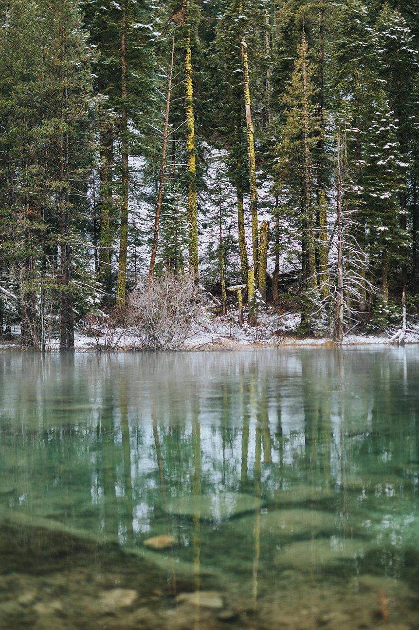 Forêt gelée