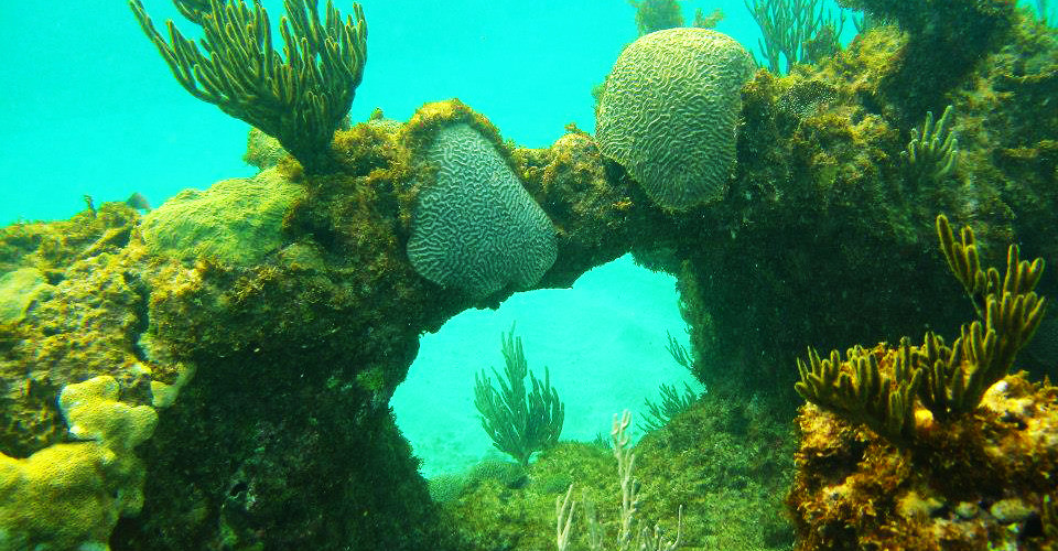 Coral reefs absorb up to 90% of wave for