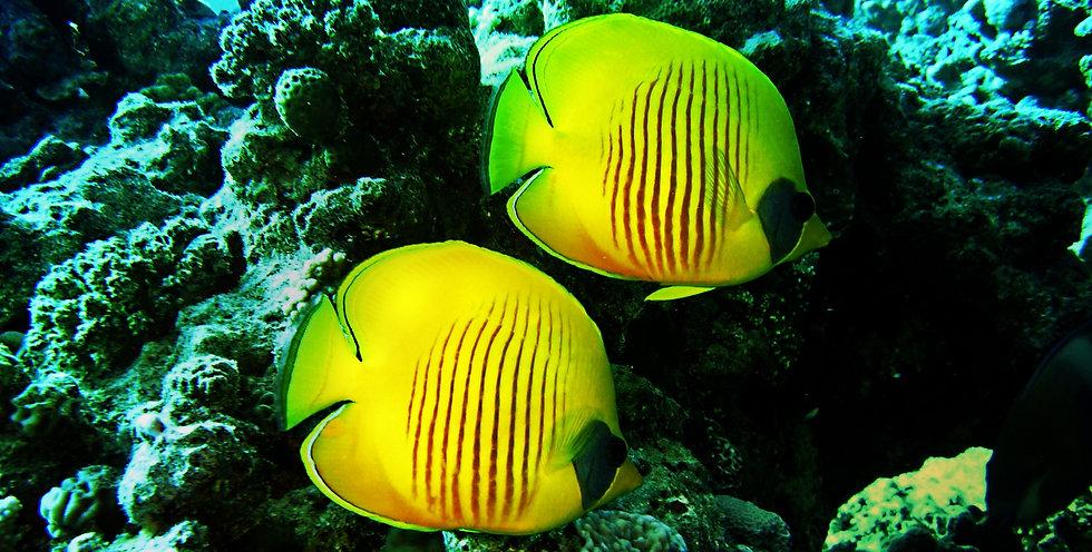 diving-1656619_1920%20Image%20by%20joaka
