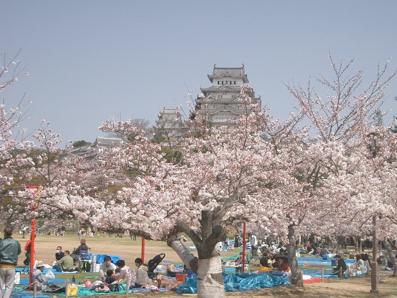 Ohanami Himeji Castle
