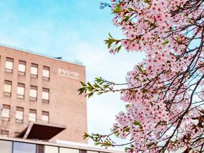 Tips dan Trik Mendapatkan Beasiswa dari Pemerintah Jepang