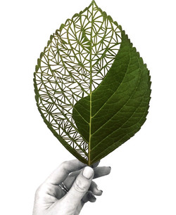 Hand Cut Hydrangea Leaf