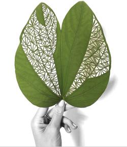 Hand Cut Bauhinia Leaf
