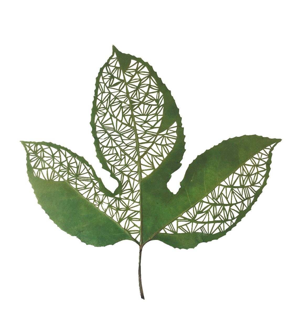 Hand Cut Passionfruit Leaf
