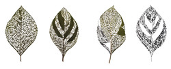 Four Leaves