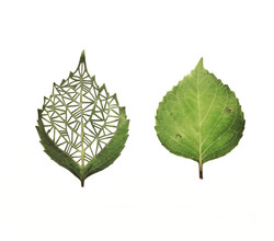 Hand Cut Mini Hydrangea Leaves