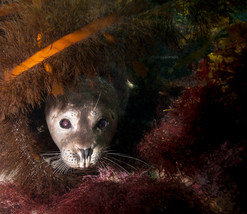 Harbor seal - Ocean Portrait